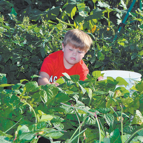Brothers open vegetable stand in Elm Grove area